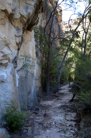 Old railway alignment track to the glowworm tunnel at Newnes